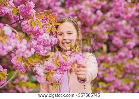 Kid On Pink Flowers Sakura Tree Background. Allergy Remedy. Child Enjoy Life Without Allergy. Sniffi