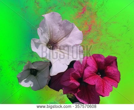 Bouquet Of Colorful Flowers On Multicoloured Background.