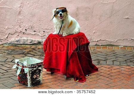Cute Dog on Bourbon Street