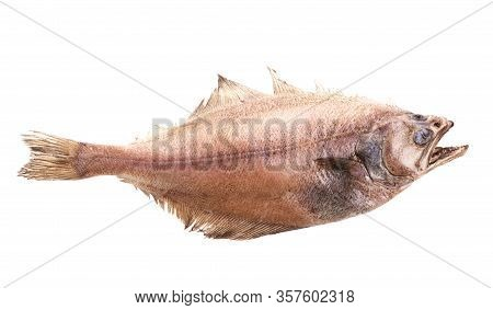 Shaped Flatfish Or Flounders (pleuronectidae) Also Known As Plaice,dab,sole Or Flukes, Isolated On W