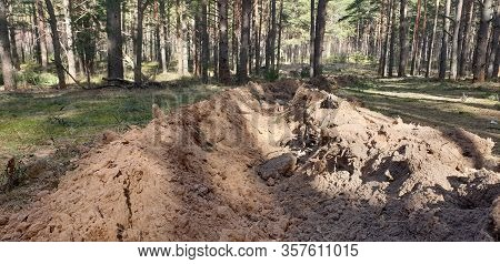 Fire Trench In The Forest. Trench In The Forest. Protecting The Forest From Fire.