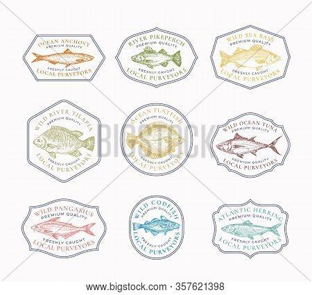Fish Vintage Frame Badges Or Logo Templates Set. Hand Drawn River And Ocean Fishes Sketch Emblems Bu