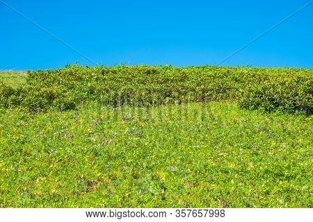 Green Hillside And Bright Blue Sky. Sunny Hillside Landscape