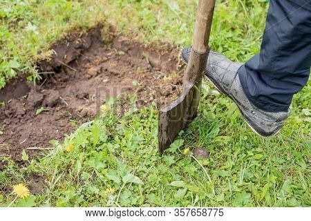 Gardener Digging With Garden Spade In Black Earth Soil.farming, Gardening, Agriculture And People Co