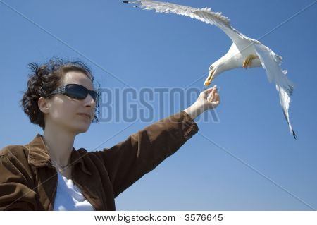 Girl Feed Seagull