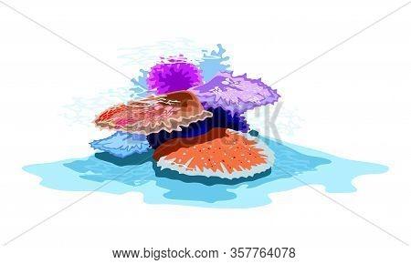 Orange, Red, Violet, Blue Beautiful Corals Under Sea Water. Colony Of Marine Invertebrates Using In