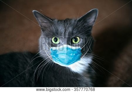 Protective Antiviral Mask On The Cats Face. Protective Face Mask For Animals, Coronavirus And Hantav