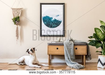 Beautiful Dog Lying On The Parquet. Modern Scandinavian Living Room Interior With Black Mock Up Post