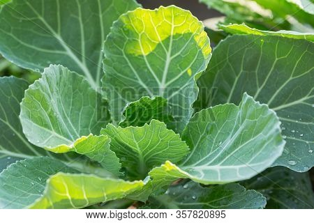 Homegrown Vegetables. Fresh Organic Vegetables. Colorful Vegetable. Healthy Vegetable. A Variety Of