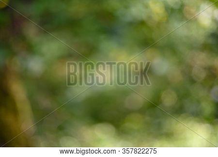 Defocus. Green Background. Defocus Of Green Foliage.