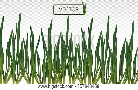 3d Realistic Green Onion Isolated On Transparent Background. Fresh Green Onion Close Up. Banner With