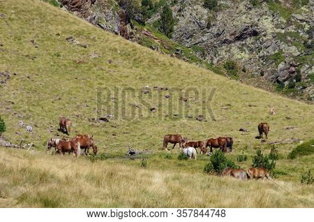 Horses On Meadow In Mountain Valley In Pyrenees Near Coma Pedrosa Peak. Andorra