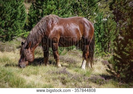 Horse On Meadow In Mountain Valley In Pyrenees Near Coma Pedrosa Peak. Andorra