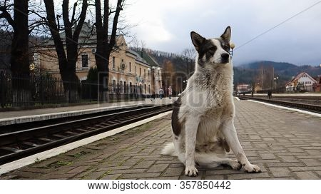 White Dog With Black Spots. Playful And Hungry Dog On A Suburban Train Station Amid Railroad Tracks