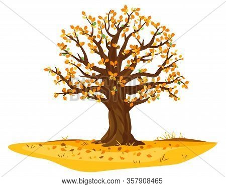One Wide Massive Old Oak Tree With Orange Leaves And Acorns Isolated Illustration, Majestic Oak With