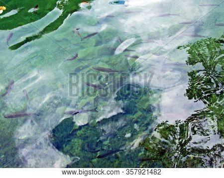 Flora And Fauna Of Plitvice Lakes National Park Or Nacionalni Park Plitvicka Jezera, Unesco Natural