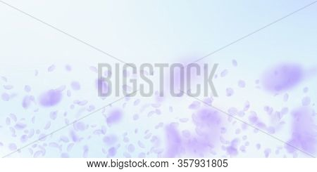 Violet Flower Petals Falling Down. Marvelous Romantic Flowers Gradient. Flying Petal On Blue Sky Wid