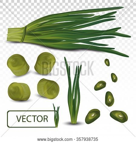 3d Realistic Green Onion Isolated On Transparent Background. Fresh Green Onion Close Up. Top View. O