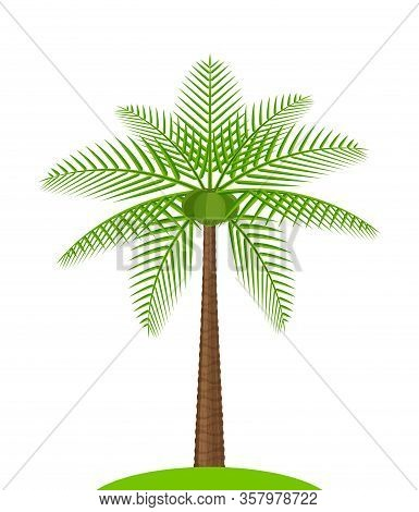 Coconut Tree Simple Isolated On White, Illustration Coconut Palm Tree, Coconut Tree For Clip Art, Pa