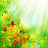 Autumn background with colorful leaves and place for text. Check my portfolio for vector version. poster