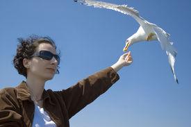 Girl Feed Seagull