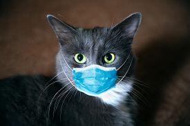 Protective Antiviral Mask On The Cats Face. Protective Face Mask For Animals, Coronavirus And Hantav