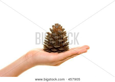 Cone On Palm