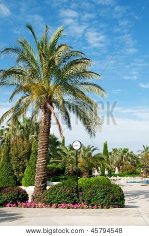 Street Clock And A Palm Tree In A Beautiful Park