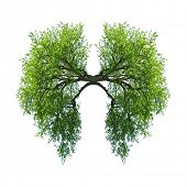 green tree lungs isolated on white poster