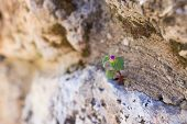 small flower grows in the rock poster