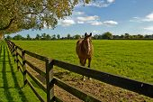 horse in a paddock in the irish national stud poster