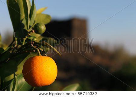 Arancia rossa di Sicilia