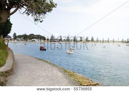 Boats moored in bay at Tauranga, New Zealand