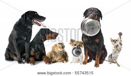 Hungry Pets