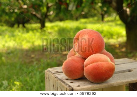 Orchard Peaches