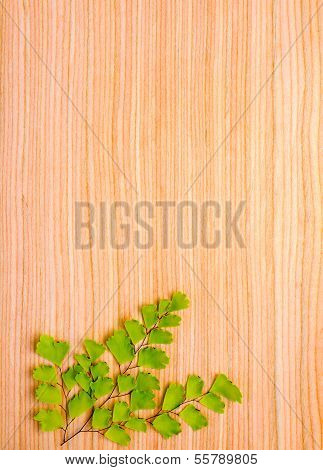 Branch On Wooden  Background