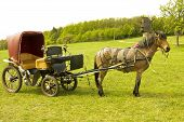 Brown horse with retro carriage on green field forest and windmill behind. poster