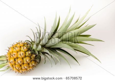 Mini Pine Apple