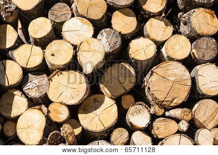 Stacked Wood Logs Under The Sun