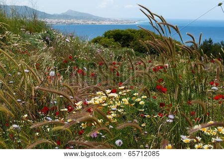 Background Of Wildflowers