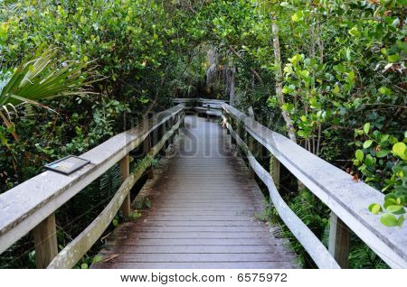 Observation Trail In The Everglades National Park, Florida
