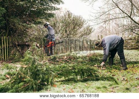 Gardeners Pruning Tree