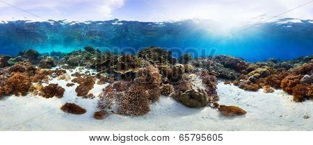 Underwater panorama of the vivid coral reef in tropical sea. Bali Barat National Park, Indonesia