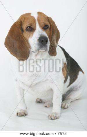 Sit, Good Dog