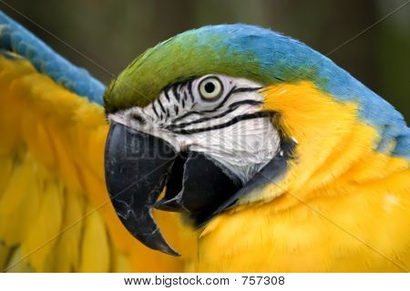 Macaw stretching