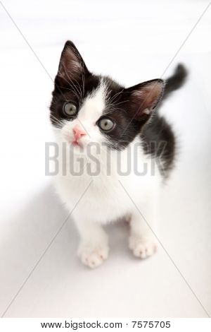Small, Black And White Kitten Look Up Into The Camera