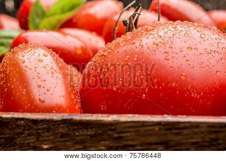 Macro Shot Of Tomatoes With Waterdrops