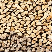 stack birch firewood in Russia natural background poster
