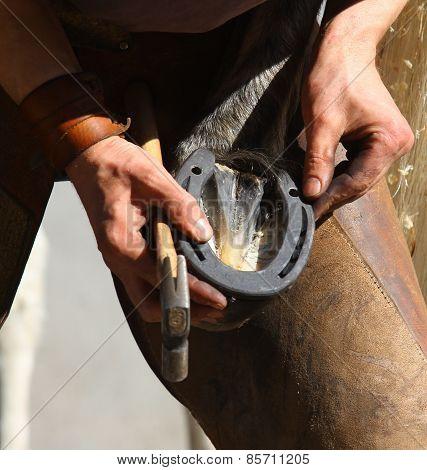 Farrier fitting a horseshoe closeup