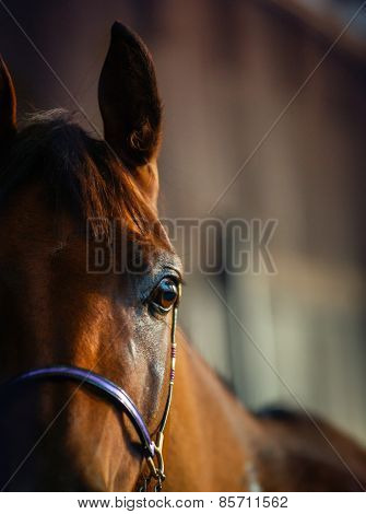 Equine Detail